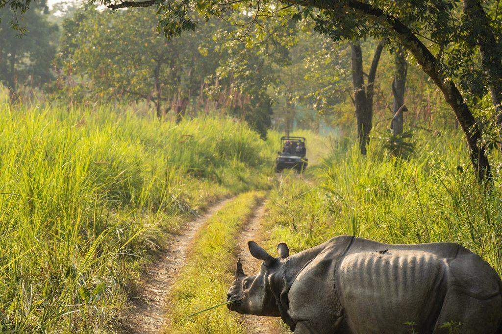 Photo of Rhino